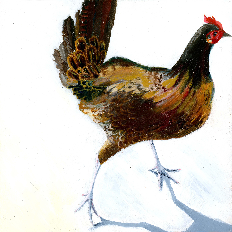 Chicken, Key West, 2010